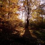 Padurea Runc – Peisaje incredibile