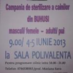 Campanie de sterilizare a cainilor