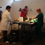 Sterilizare câini