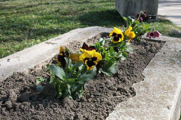 Continuă plantarea de flori. Dar și furturile de flori.