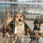 A început strângerea câinilor comunitari de pe străzi