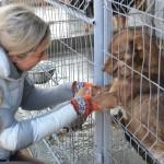 Câinii din Buhuși emigrează în Marea Britanie
