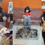 Zeci de câini și pisici au fost sterilizați în urma unei campanii gratuite